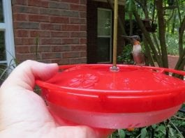 Do's and don'ts of attracting hummingbirds and getting one to land on your hand