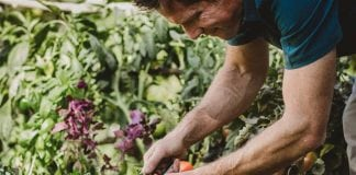 4 Tips to Pull Together a Garden-to-Table Meal This Summer