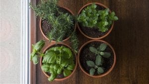 5 ways gardening and plants can reduce stress