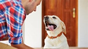 Give pets the ultimate mealtime experience