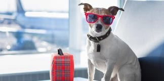 New technology helps keep pets safe while traveling