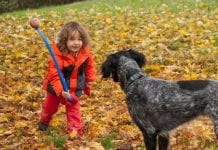 Fall with our four-legged friends